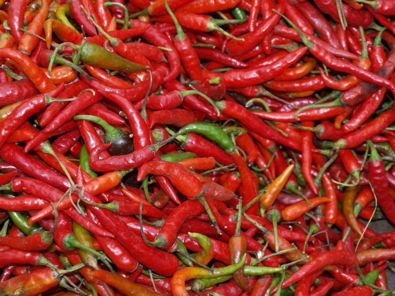 Papryczki chili – ozdoba kuchni